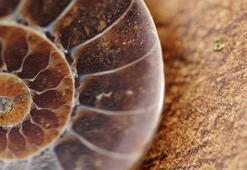Fosil Ve Fosil Yakıt Nedir Fosil Nasıl Oluşur, Ne İşe Yarar