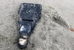 Kuşadasında palet içerisinde ceset parçası bulundu