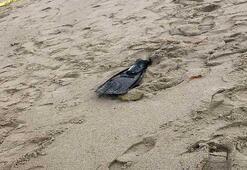 Sahilde şok görüntü Yüzücü paletinde ayak kemikleri bulundu