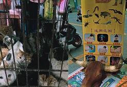 Çinden vahşi hayvan pazarı yeniden açıldı iddialarına yalanlama
