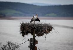 Leylekli Köy kuş cenneti olacak