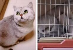 Karantinaya alınan ailenin kedisi 54 gün yalnız kaldı, bunlar oldu