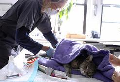 Hong Kongda bir kediye sahibinden corona virüsü bulaştı