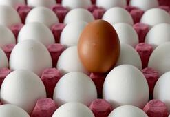 Yumurta üreticileri için bir kapı kapanırken diğerleri açılıyor