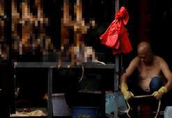Çinde o şehirde kedi-köpek eti yemek yasaklandı