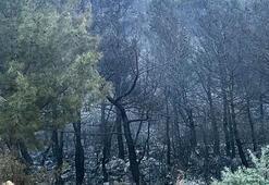 Kaşta 70 dönüm orman ve 4 dönümlük zeytinlik alev alev yandı
