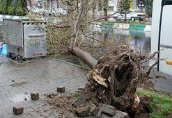 Şiddetli rüzgar kenti vurdu