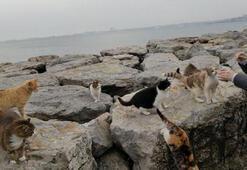 Kadıköy Sahilinde aç kalan hayvanlar unutulmadı