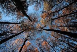 Ormanların insan hayatındaki önemi ve faydaları nelerdir