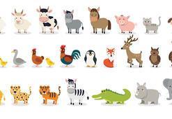 Memeliler nedir Memeli hayvanlar hangileridir ve ortak özellikleri nelerdir