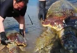 Deniz kaplumbağası halatlara dolanmış halde bulundu