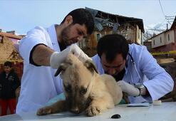 Veterinerler açık mı Sokağa çıkma yasağında veterinerler çalışacak mı
