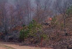 Kütahya'da 50 dönüm karaçam ormanı yandı