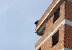 4 katlı inşaattan sarkan köpek, uyuşturucu iğne atılarak yakalandı