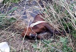 Sulama kanalına düşen at kurtarıldı