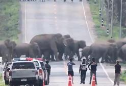 Taylandda caddeyi filler bastı