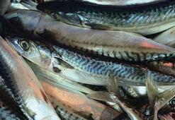 Uskumru balığı nasıl marine edilir Fileto şeklinde uskumru pişirmenin yolları