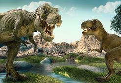 Dinozorların nesli neden ve nasıl tükendi Kısaca dinozorların yaşamı