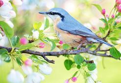 Kuşlar hakkında merak edilenler