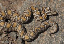Profesörden yılanları öldürmeyin uyarısı