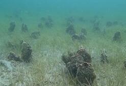 Denizin altı midye mezarlığına döndü