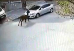Arnavutköy'de bir at, arabayı böyle pert etti