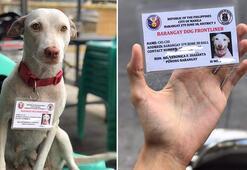 Corona virüs tedbirleri denetiminde görevli köpeğe kimlik kartı verildi