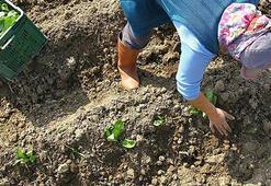 İyi ve organik tarım uygulamalarına mücbir sebep düzenlemesi