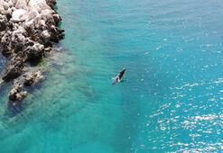 Akdeniz fokları Üç Adalarda görüntülendi