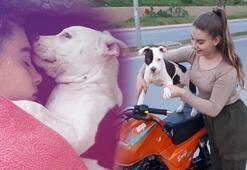 Köpeğinin ölümüne neden olan sürücünün bulunmasını istiyor