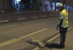 Polisin, sokak köpeği ile imtihanı güldürdü