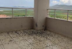 Evin balkonunu kara böcekler bastı