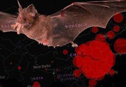 Son dakika haberi: Dünyayı şoke eden corona virüs açıklaması: Çok sayıda delil var...