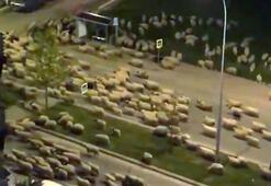 Samsunda koyun sürüsü, caddeyi kapattı