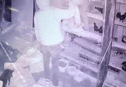 Güvercin hırsızları güvenlik kamerasına böyle yakalandı