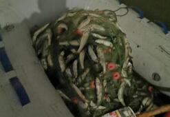 Vanda 350 kilo inci kefali ele geçirildi