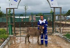 Köpeklerin saldırdığı eşek, Emekli Hayvanlar Çiftliğine yerleştirildi