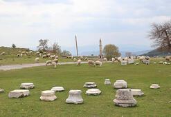 Antik kente koyun sürüsü girdi