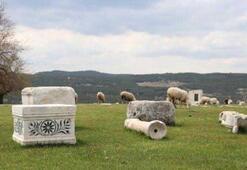 Tabea Antik Kentine koyun sürüsü daldı