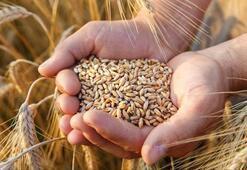 Açıklanan buğday alım fiyatları çiftçilerin yüzünü güldürdü