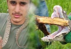 Hakkaride koca engerek yılanı bulundu