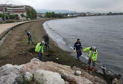 Kocaeli'nde sahillere vuran yosunlar temizlendi