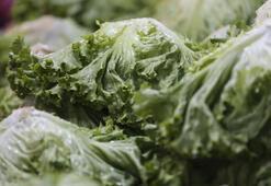 Eskişehirde yetiştirilen ürünler İstanbulda sofraları yeşillendiriyor