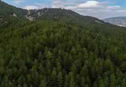 Ormanların korunmasına fotokapan desteği
