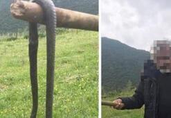Gaziantepte yakaladı 2 metre boyunda... Bu fotoğraftan 6 gün sonra cezası belli oldu