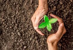 Geleceğe Nefes Ol kampanyası fidan bağış nasıl ve nereden yapılır Sağlık Kahramanları Hatıra Ormanı kampanyası fidan alma linki