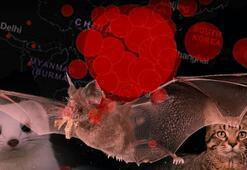 Son dakika haberi: DSÖden çarpıcı corona virüs açıklaması Aynı yeri işaret etti...