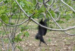 Öldürdüğü kargaları ağaçlara asan kişiye tepki