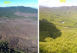 İstila sonrası ormanlar yeniden yeşerdi