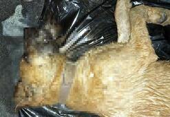 2si yavru 4 köpek zehirlenerek öldü